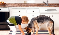 A child feeds his dog