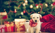 A new puppy sits under a Christmas tree.