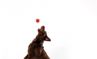 A dog leaps to catch a ball.