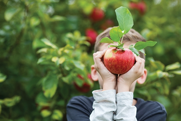 A boy holds an apple at Apple Jack Orchards.