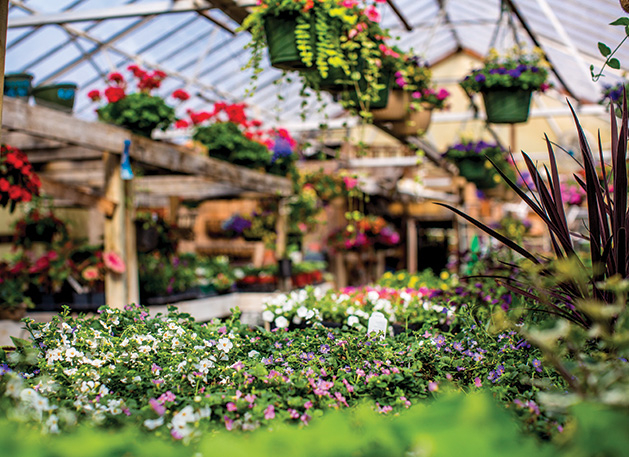 A variety of plants at Whispering Gardens, voted best nursery/garden center in the Best of Woodbury 2019 readers' choice survey.