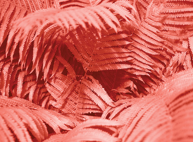 Palm leaves colored in the Pantone Color of the Year, Living Coral