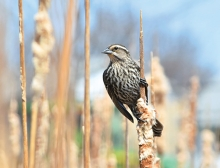 A bird rests on a reed in this 2018 Focus on Woodbury photo contest winner.