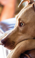"""Watchdog"" by Chris Dummer, pet photo, dog photo"