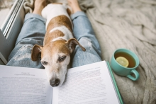 A dog relaxes on their owner's lap while the owner reads.