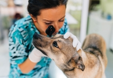 A veterinarian examines a dog. Dogs need annual check-ups just as humans do.